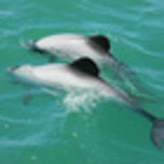 MP criticises Govt action on dolphins
